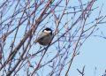 Una de las aves fotografías por la asociación