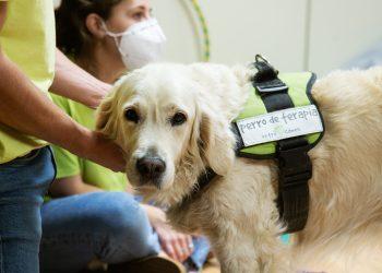 Imagen de un perro en un taller