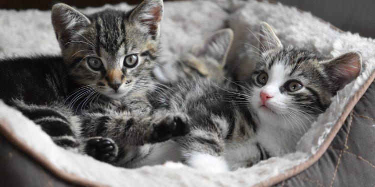 Imagen de archivo de dos gatos